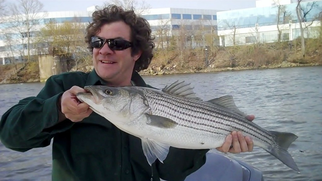 Striped bass trenton nj 4 10 2011 0 01 11 18 mickey 39 s for Nj fishing reports freshwater