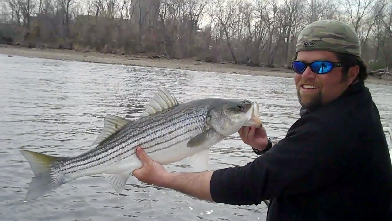 Striped bass in the river 4 10 2011 mickey 39 s guide for Nj fishing reports freshwater