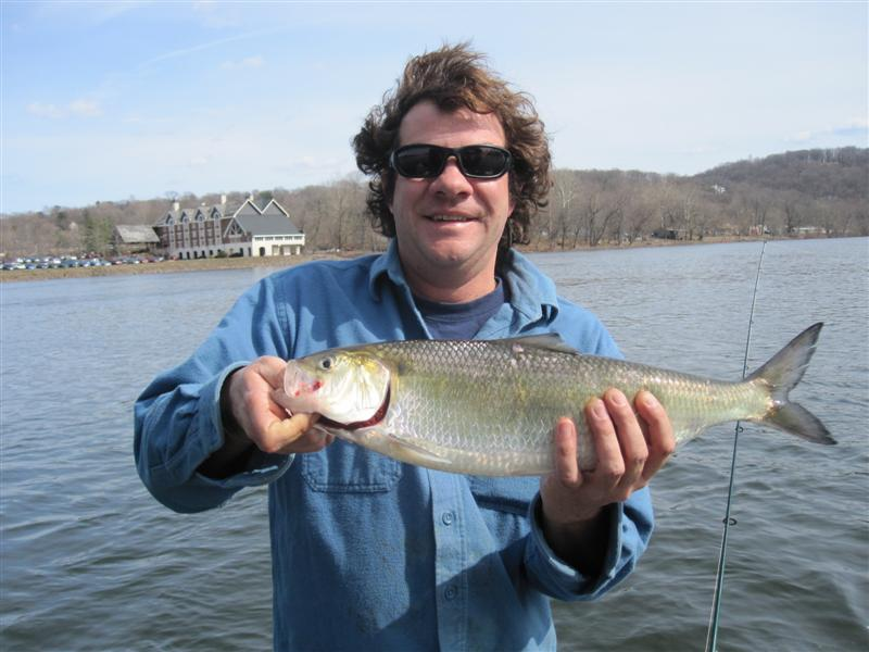 Shad report lambertville nj 4 3 11 mickey 39 s guide for Fishing report nj