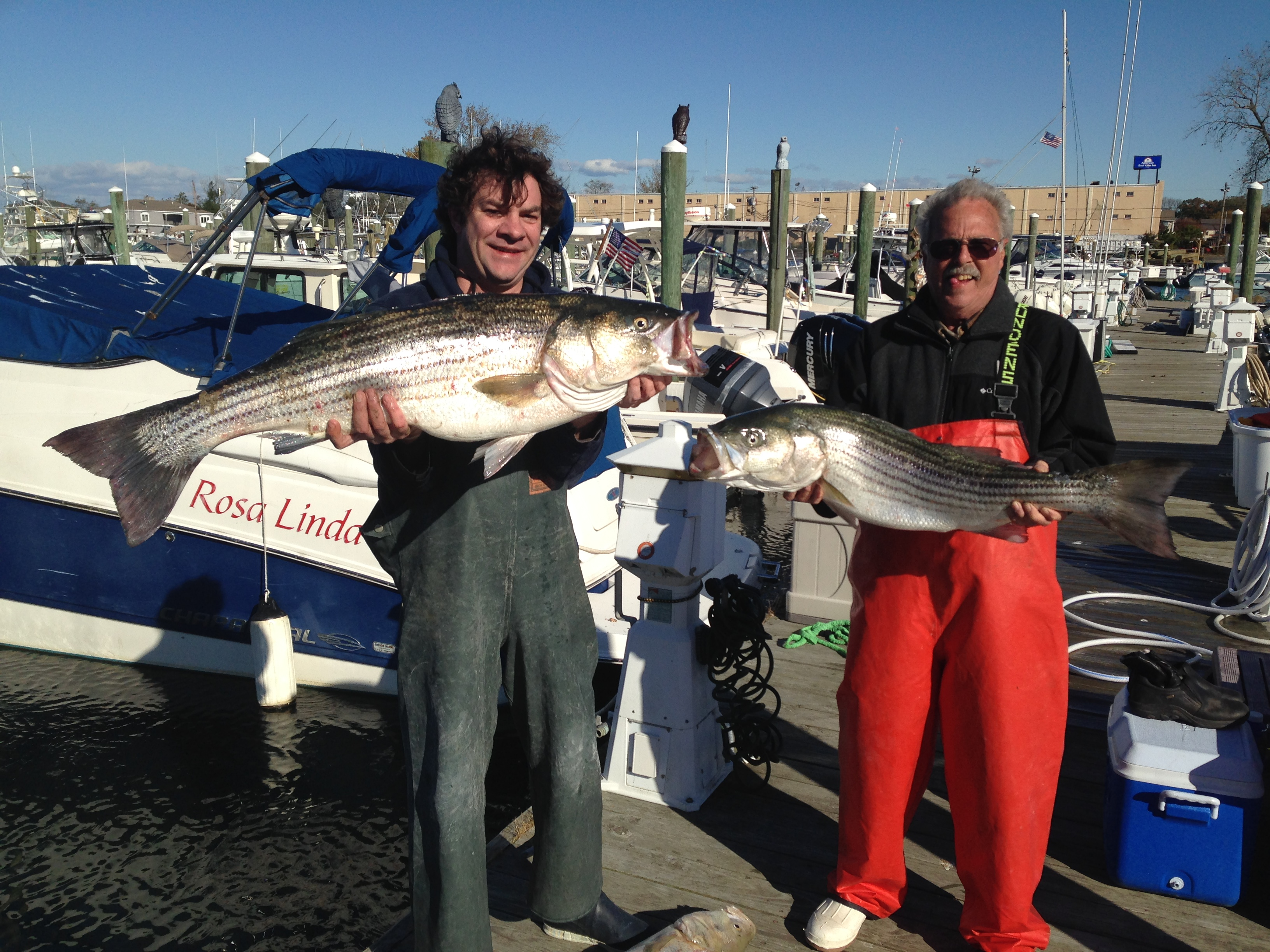 Striped bass report 10 26 2014 mickey 39 s guide service for Striped bass fishing reports